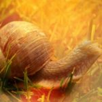 Festina Lente: Make Haste Slowly