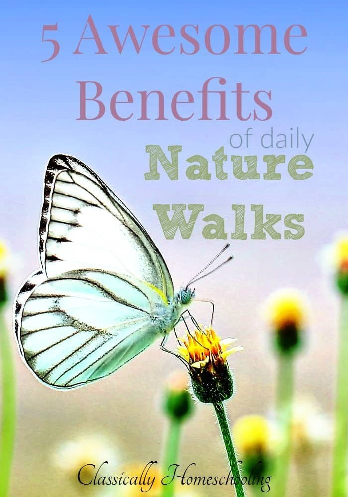 Lately we're heading outside to a local park full of wildlife for a couple hours and found many wonderful benefits of a daily nature walk with the children.